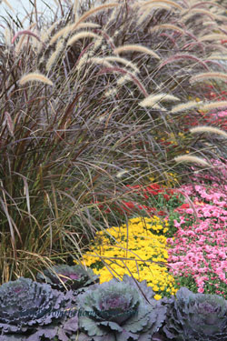 cabbageandgrassweb