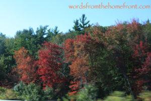 leaveschangingweb