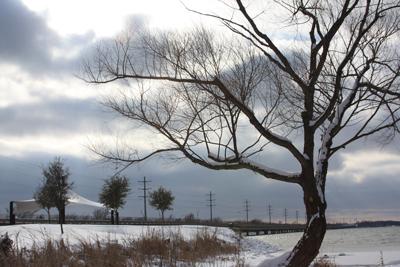 wintertreeweb